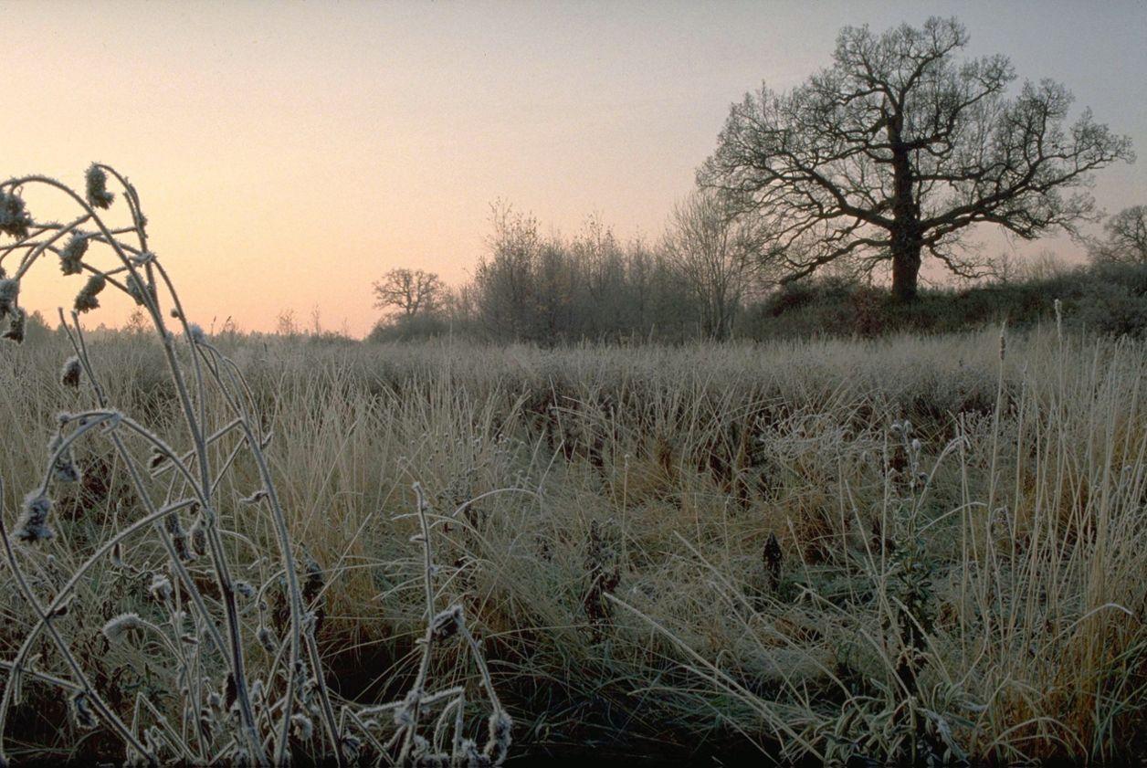 Frost och markfrost | SMHI
