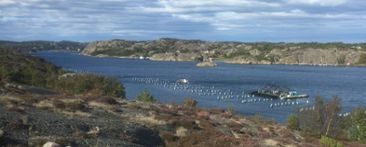 Mussel farm at the Swedish West Coast