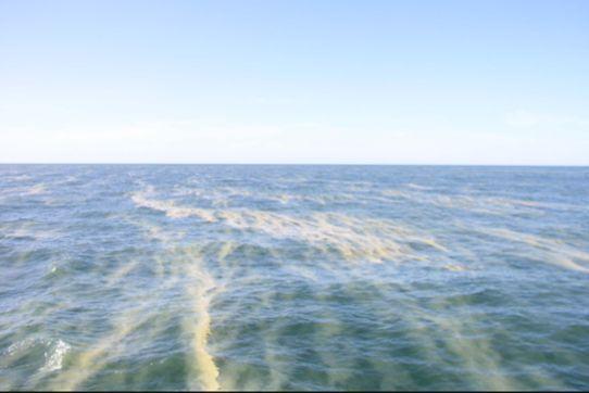 Cyanobakterier tar over vid varmt och stilla vader