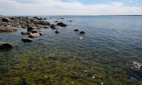 Stenar vid havskust