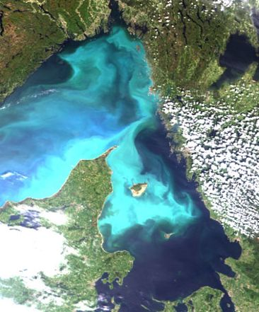 Satellite image of coccolithophorid blooms. Photo SMHI