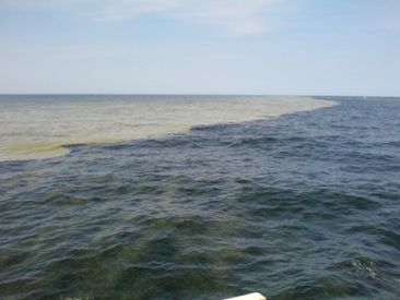 Algal bloom in the Baltic Sea, summer 2006.
