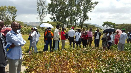Visit to a research field where more drought-tolerant crops are being tested.